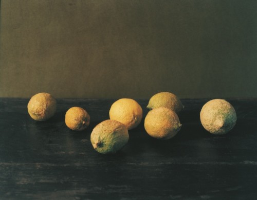 Faigenbaum_Patrick_Citrons_Santulussurgiu_2006_Courtesy of the artist
