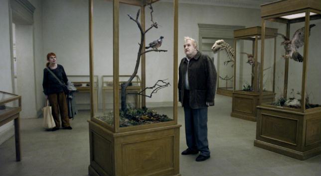 Un piccione seduto sul ramo riflette sull'esistenza